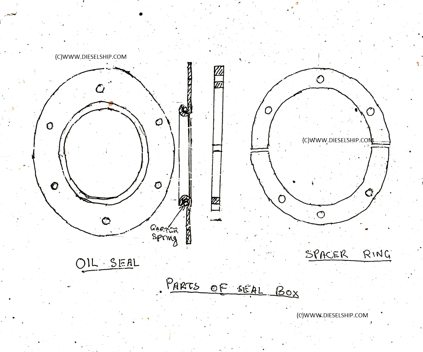 Oil seal and spacer ring
